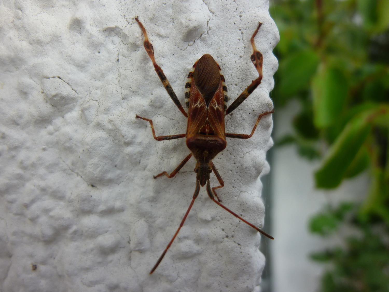 Insekten: Wanzen Im Haus: So Wird Man Die Stinkekäfer