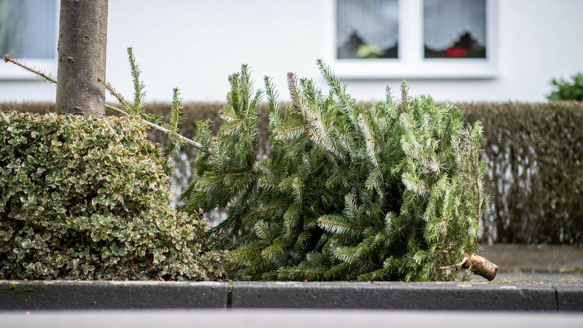 Weihnachtsbaum Ab Wann.Ulm Und Neu Ulm Weihnachtsbaum Abholung 2019 Wann Und Wo