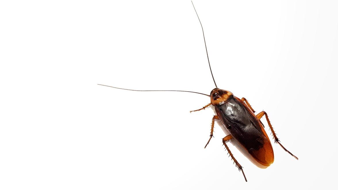 Insekten Und Ungeziefer Spinnen Wanzen Motten Und Co So Wird Man Sie Wieder Los Sudwest Presse Online