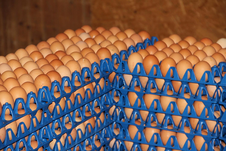 Polizei Ilshofen: Vandalen werfen Eier auf den Polizeiposten - SWP