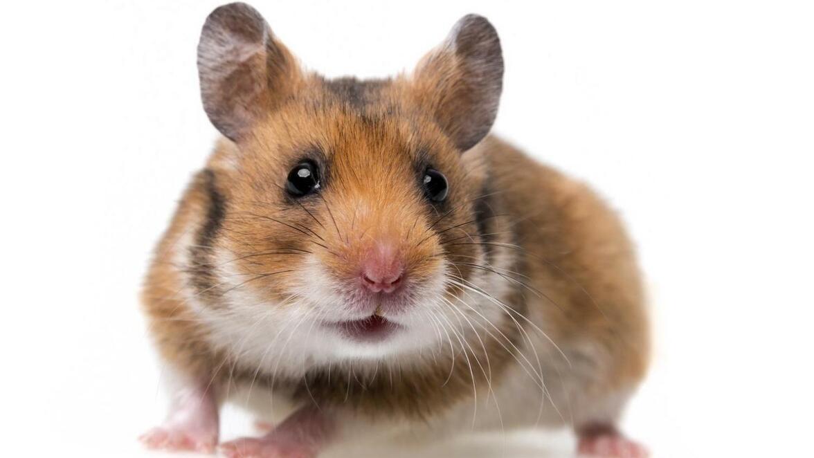 Coronavirus Goppingen Randnotiz Hamsterkaufe Den Megatrend Nicht Verpassen Sudwest Presse Online