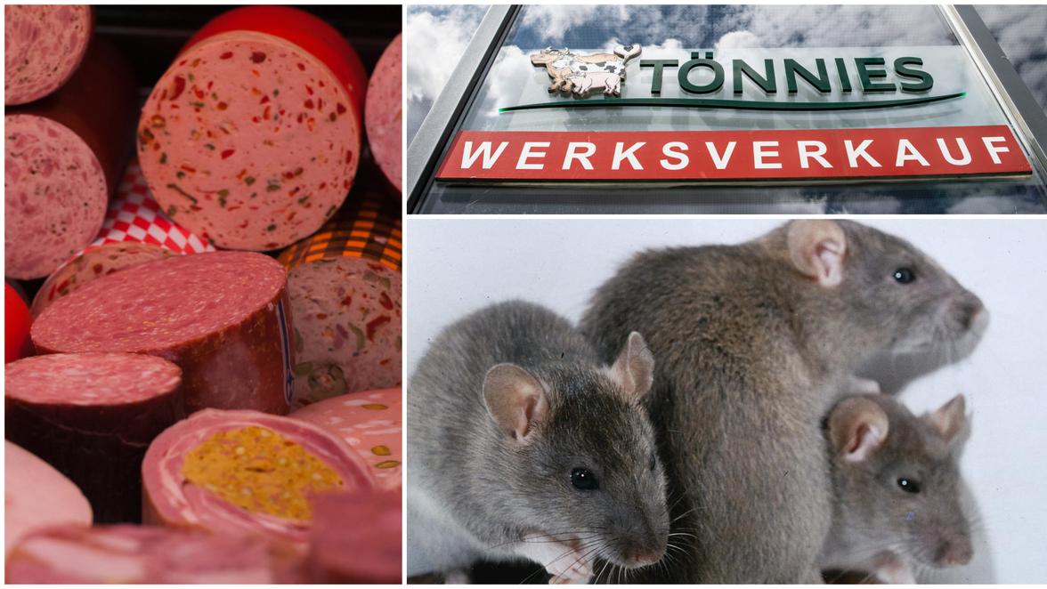 Tönnies Ratten