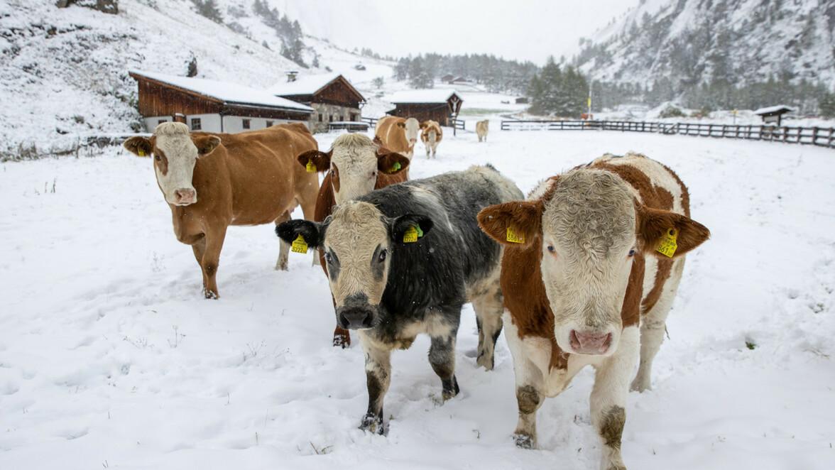 Coronavirus Osterreich Tirol Vorarlberg Osterreich Verbietet Apres Ski So Ist Die Lage In Den Risikogebieten Sudwest Presse Online