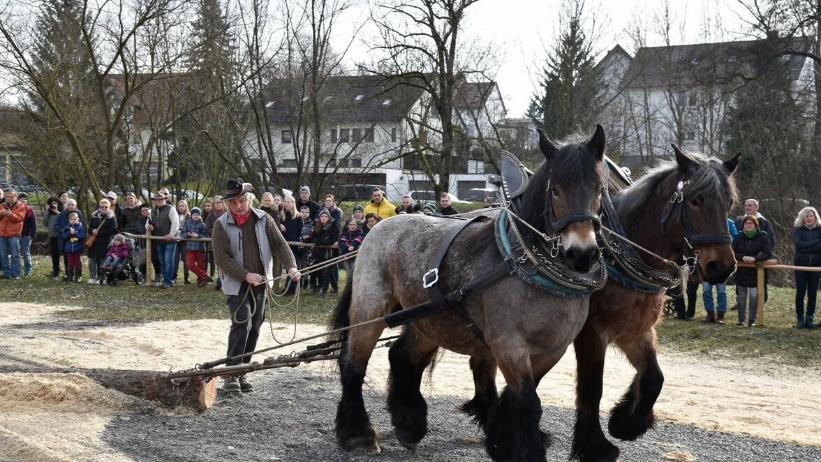 Havelberg Pferdemarkt 2021